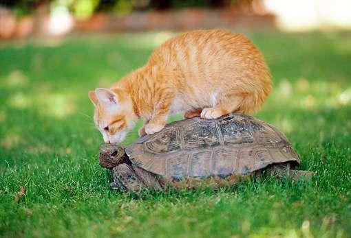Δελτίο τύπου συνάντησης σχετικά με τα αδέσποτα ζώα